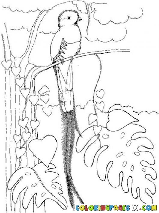 530x710 Coloring The National Bird Quetzal Guatemala Coloring Pages