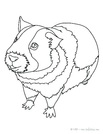 364x470 Guinea Pig Coloring Page Guinea Pig Coloring Pages Pig To Color