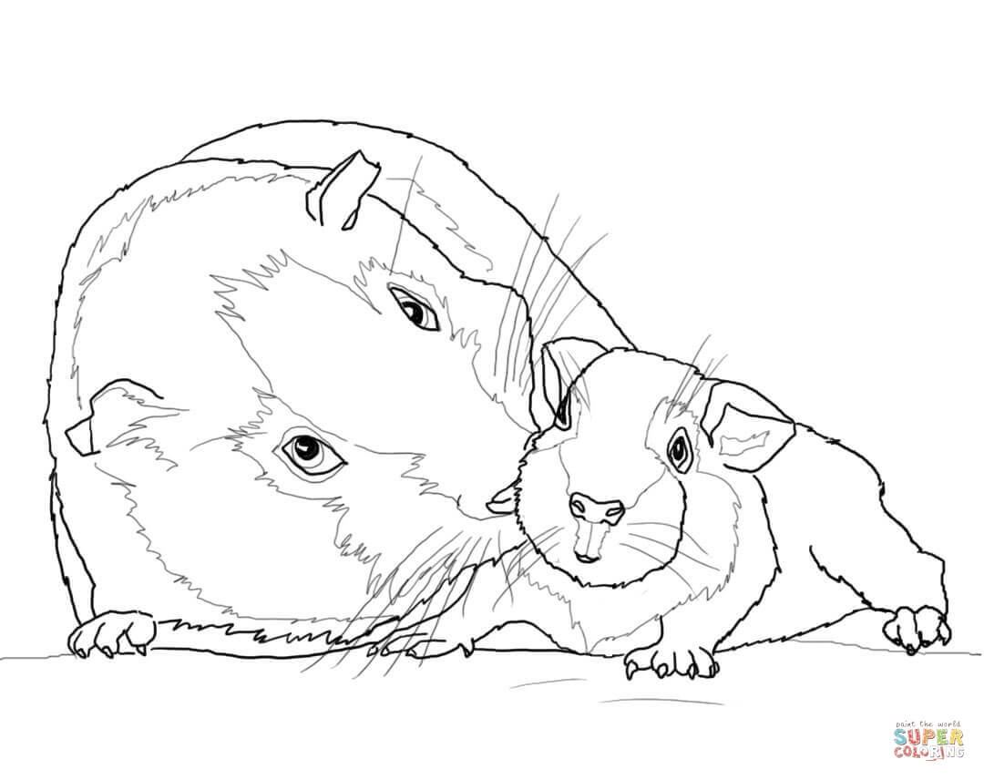 1080x856 Guinea Pig Coloring Pages Best Of Guinea Pig Mother And Baby