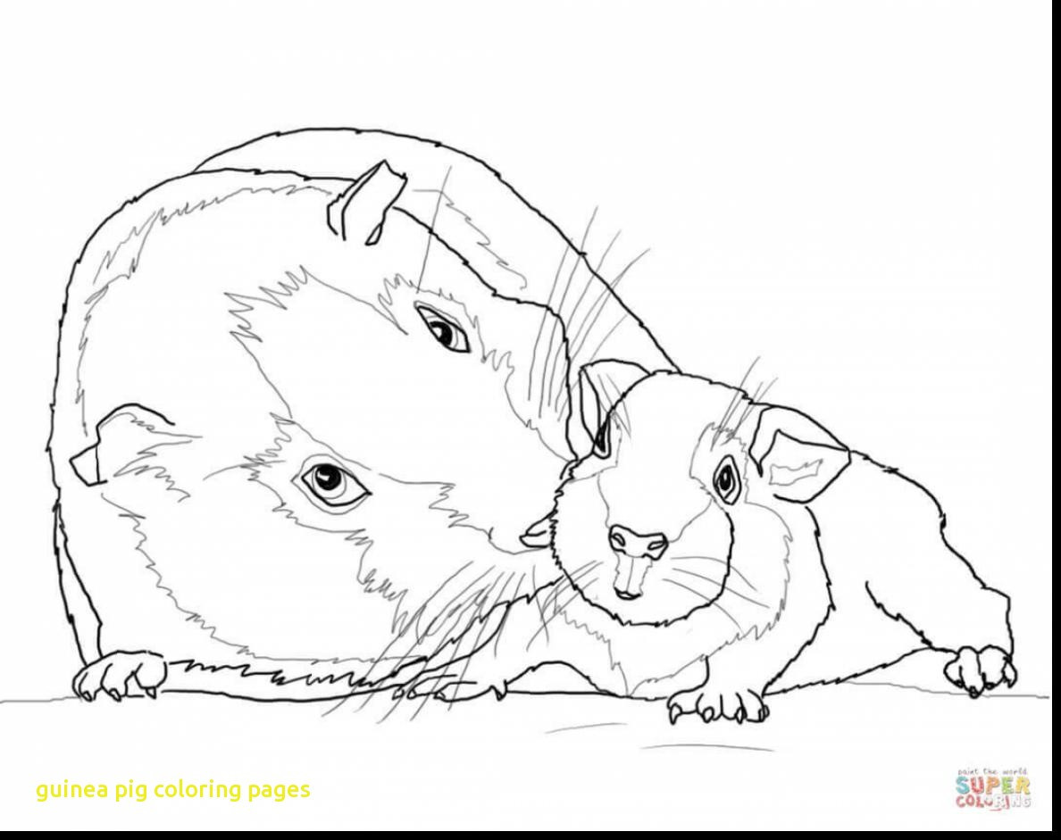1188x941 Guinea Pig Coloring Pages With Astounding Baby Sheets