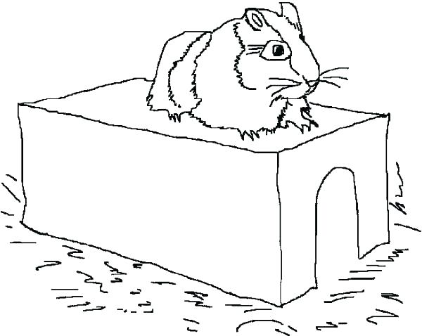 600x478 Guinea Pig Pictures To Color Gy Free Guinea Pig Coloring Page