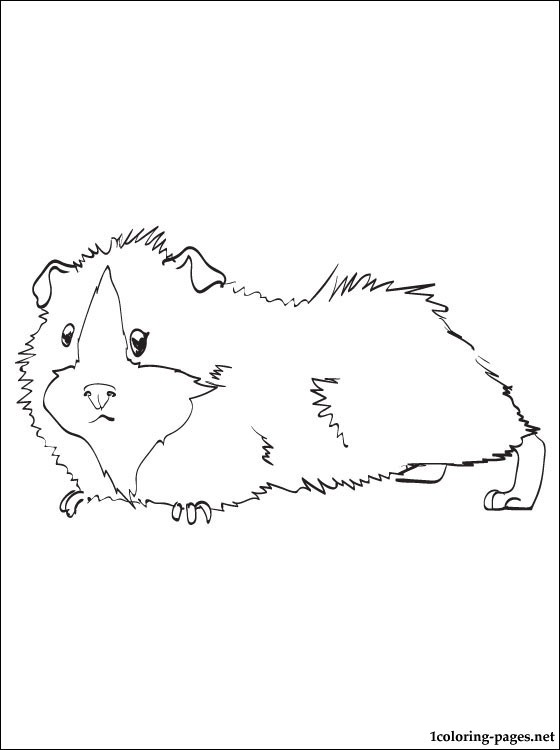 560x750 Guinea Pig Printable And Coloring Page Coloring Pages