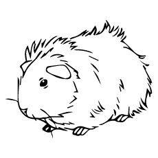 230x230 Top Free Printable Guinea Pig Coloring Pages Online Cavy