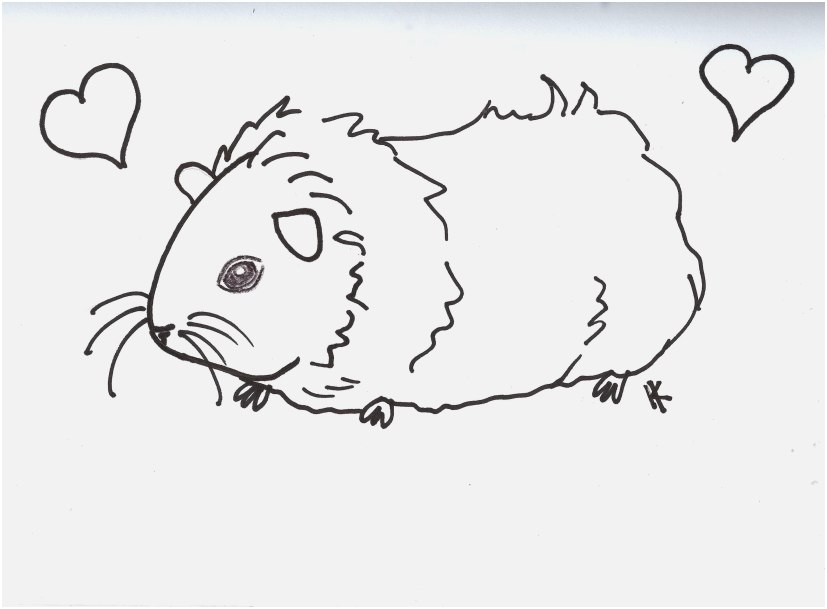 827x609 Top Rated Images Guinea Pig Coloring Pages Most Excellent