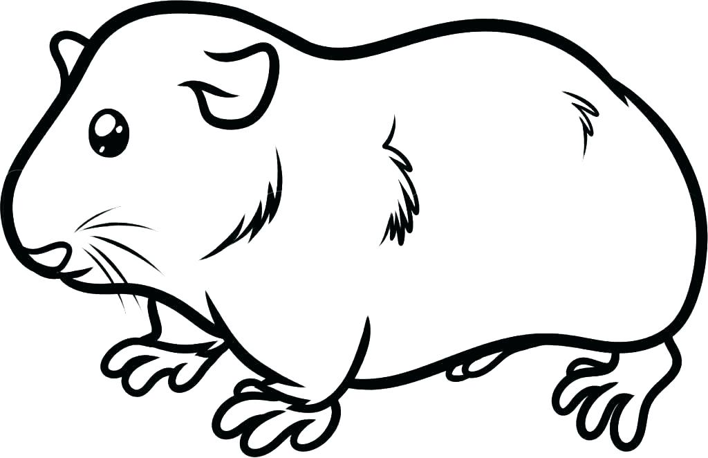 1024x662 Guinea Pig Coloring Page Guinea Pig Coloring Pages Coloring Pages