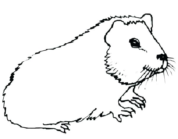 600x469 Guinea Pig Coloring Page Guinea Pig Coloring Pages Guinea Pig