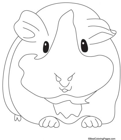 420x486 Groaning Guinea Pig Coloring Pages Download Free Groaning Guinea