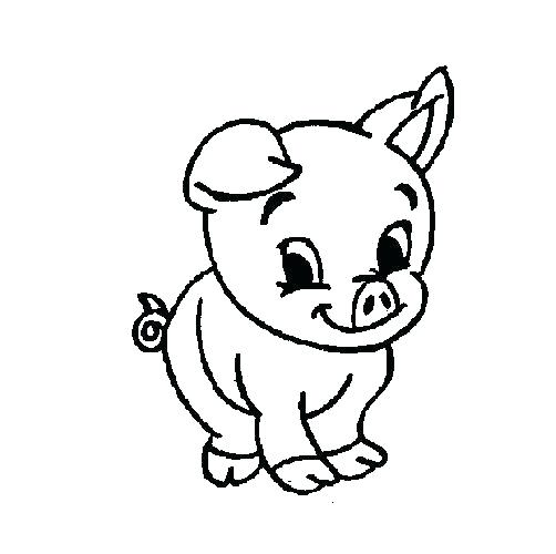 502x500 Guinea Pig Coloring Pages Also Pin Drawn Guinea Pig Color Guinea