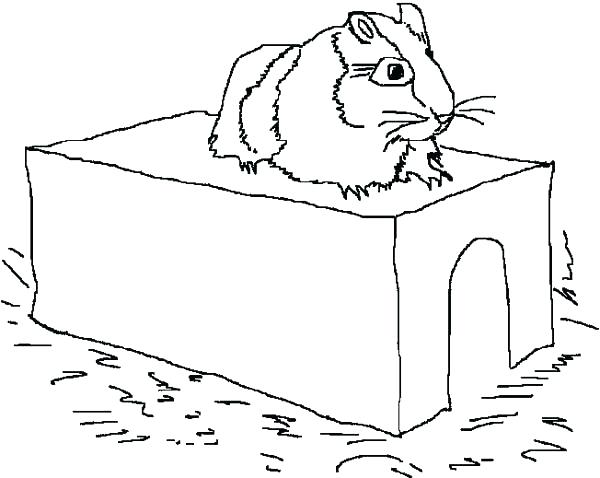 600x478 Coloring Pages Of Guinea Pigs Free Printable Coloring Pages Guinea
