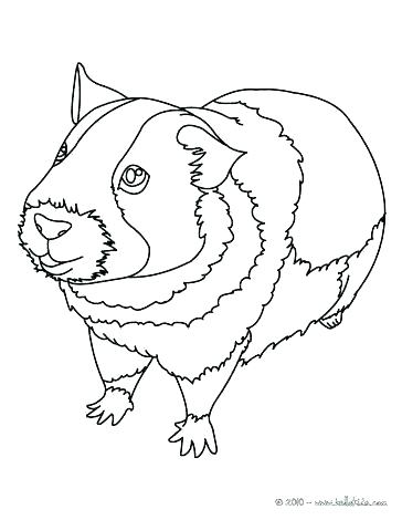 364x470 Guinea Pig Coloring Pages Coloring Pages Of Guinea Pigs Enjoy This