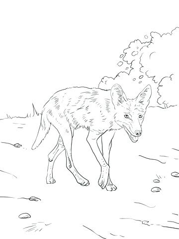 360x480 Coyote Animal Coloring Pages Coyote Coloring Pages Realistic