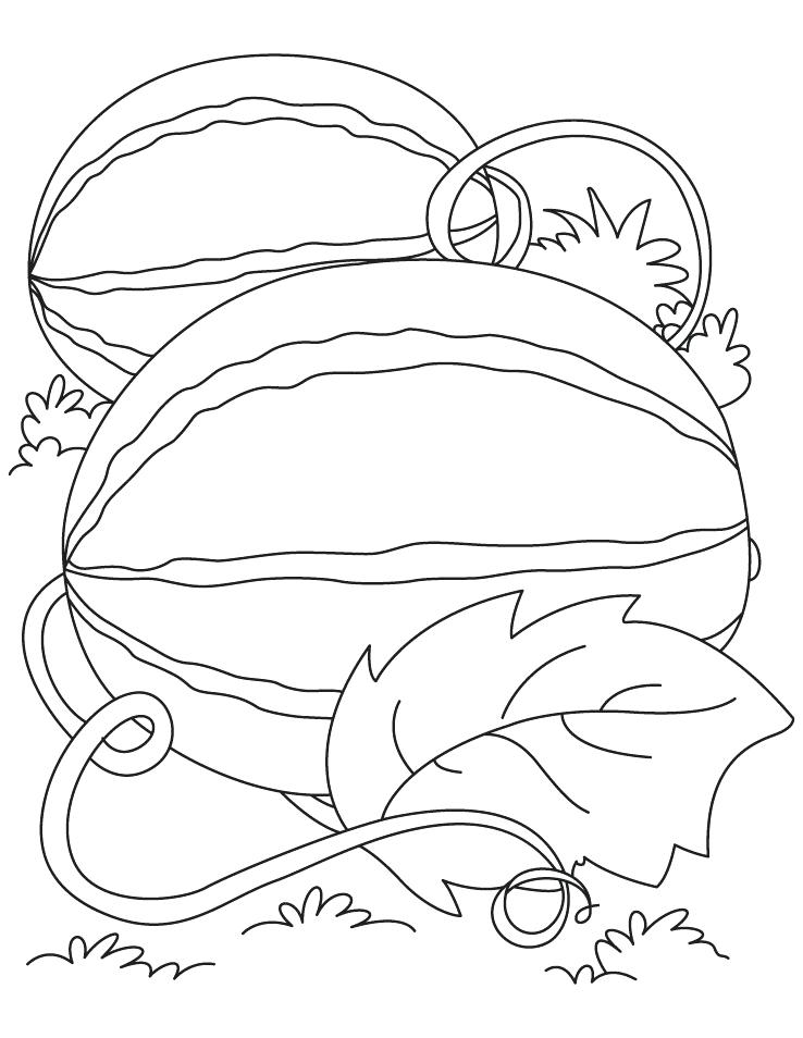 738x954 Coloring Pages Watermelon Watermelon Coloring Page Medium Size