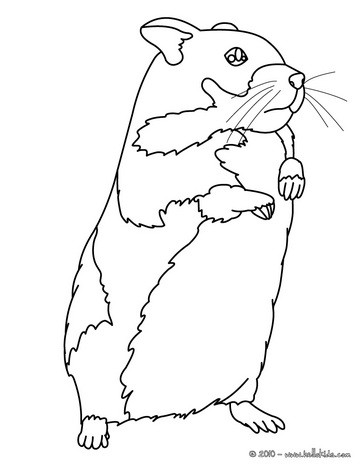 364x470 Hamster Coloring Pages