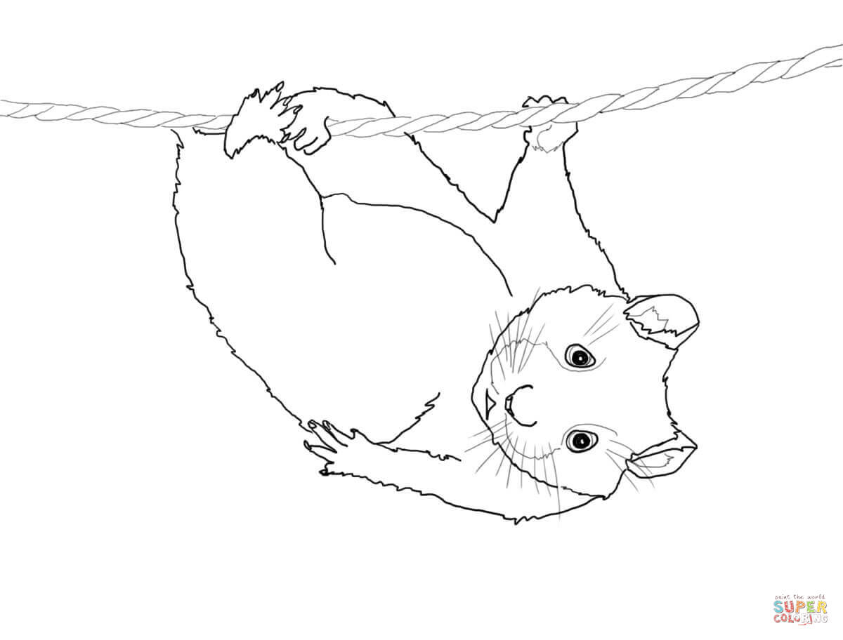 1200x912 Hamster Coloring Pages Three Walking Hamsters Coloring Page Free