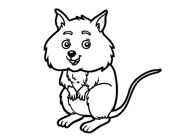 600x470 Hamster Coloring Sheet A Little Hamster Coloring Page Free