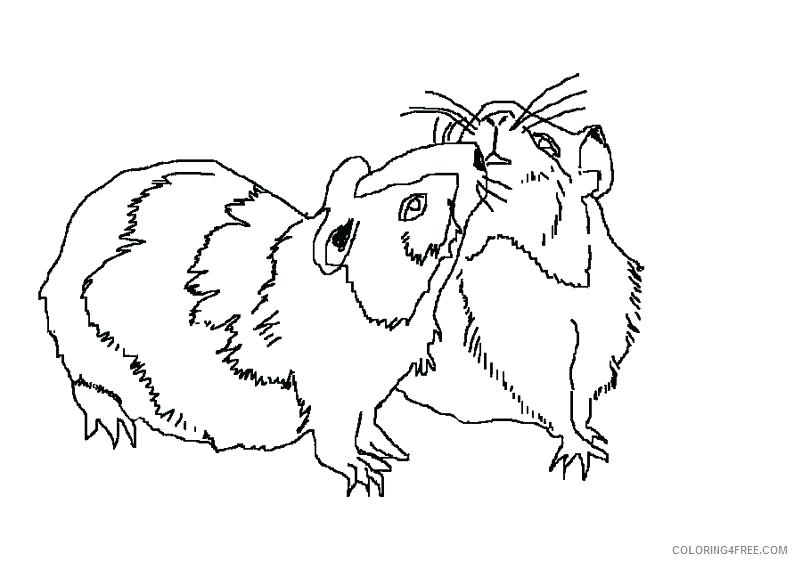 794x561 Hamtaro Coloring Pages Realistic Hamster Coloring Pages Couple