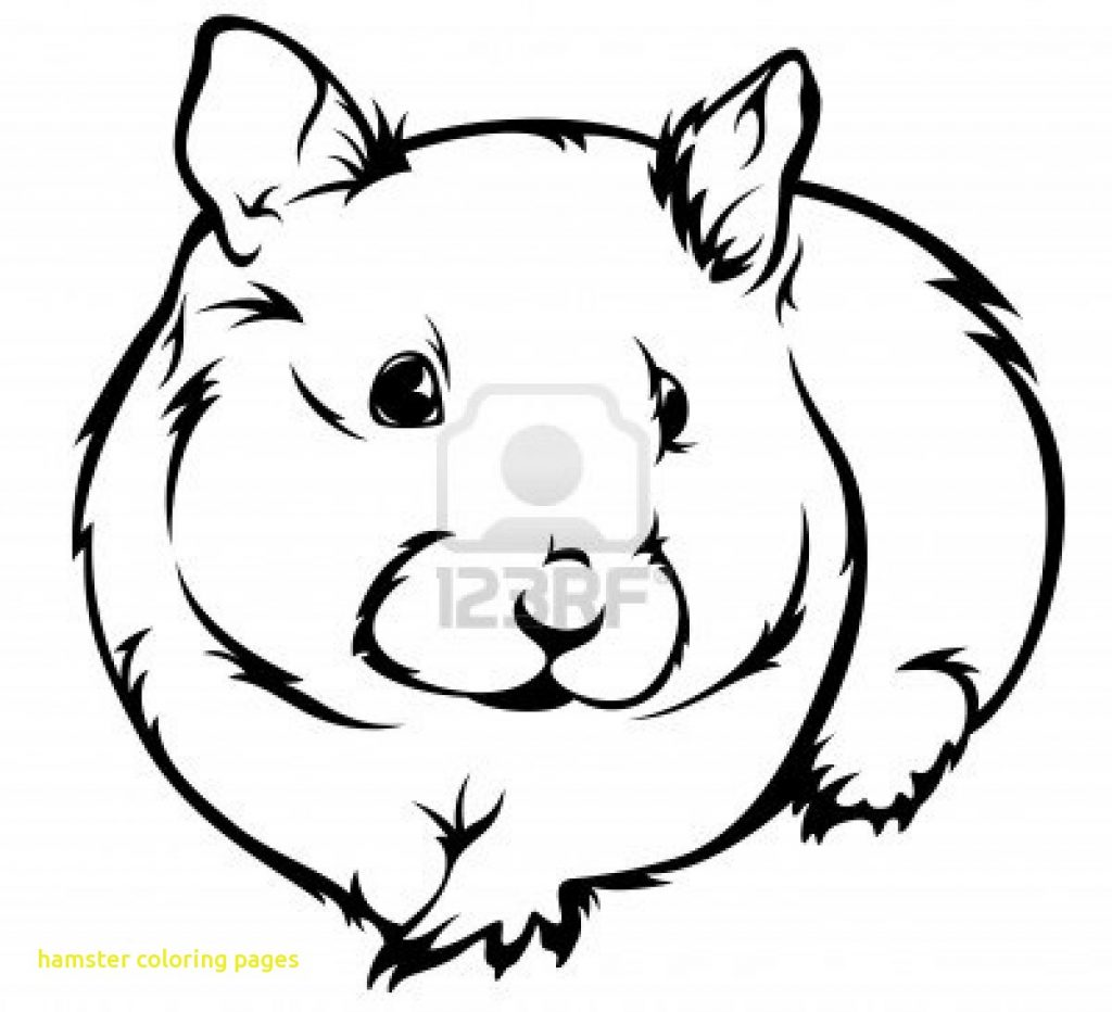 1024x932 Nice Baby Hamster Coloring Pages Component