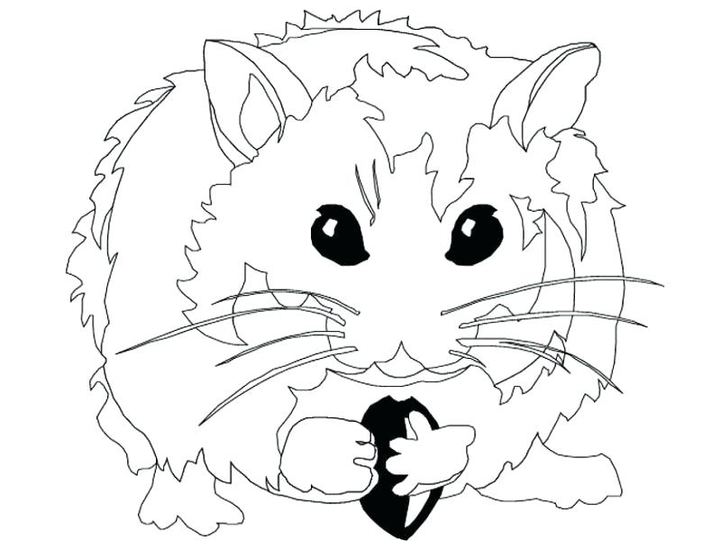 800x600 Cute Hamster Coloring Page Free Download Cute Hamster Coloring