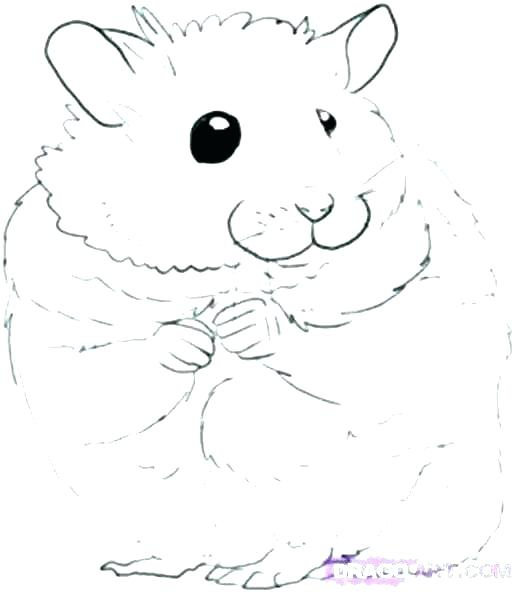 517x593 Cute Hamster Coloring Pages Cute Hamster Colouring Pages