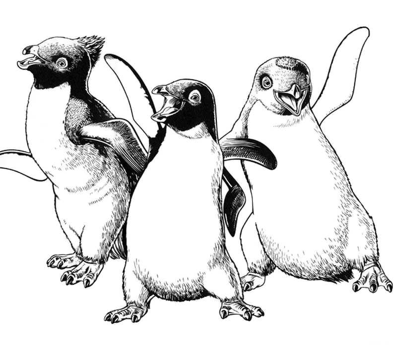 800x700 Happy Feet Coloring Pages