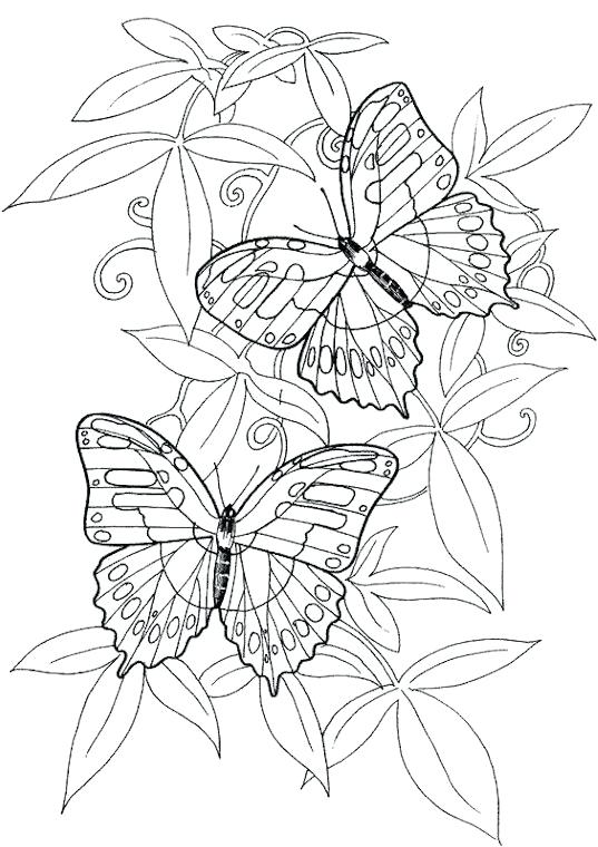 537x760 Butterfly Coloring Pages For Adults Hard Butterflies Coloring