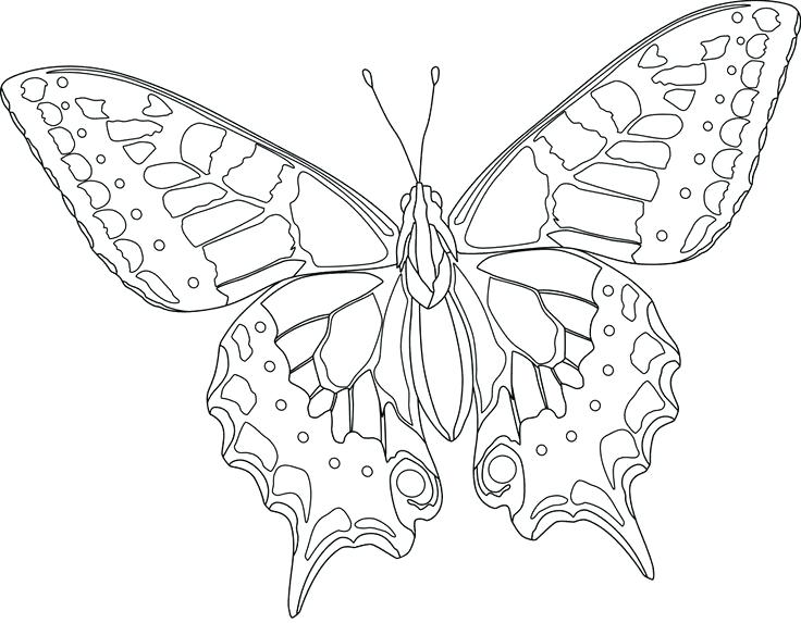 736x573 Butterfly Coloring Pages Online Free Of Butterflies Hard Activity
