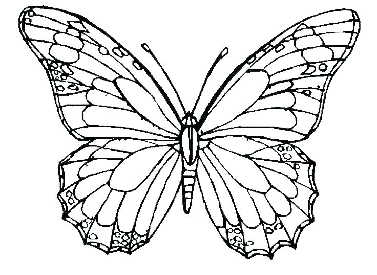 736x536 Colouring Pages Of Butterflies Butterfly Coloring Pics Butterfly