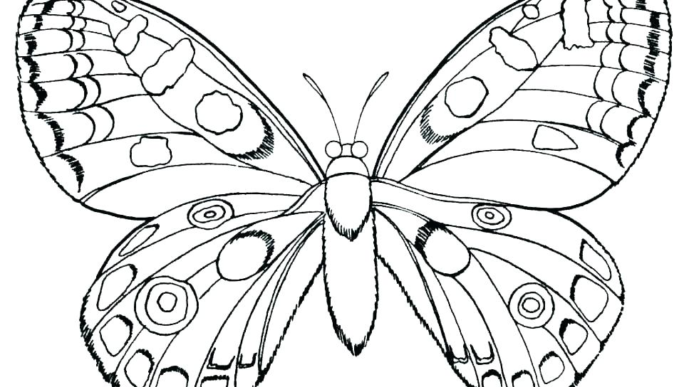 960x544 Colouring Pages Of Butterflies Free Butterfly Coloring Pages