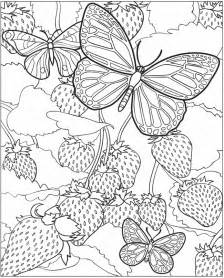 224x278 Butterfly Coloring Pages Painted Lady Butterfly Coloring