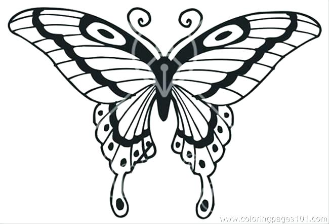 650x442 Butterflies Coloring Pages Butterfly Coloring Pages For Adults