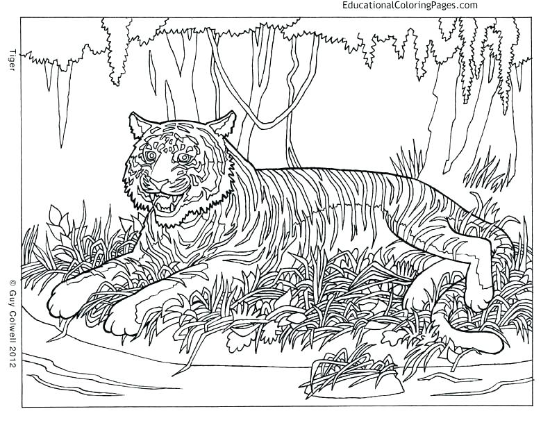 792x612 Extremely Hard Coloring Pages Vanda