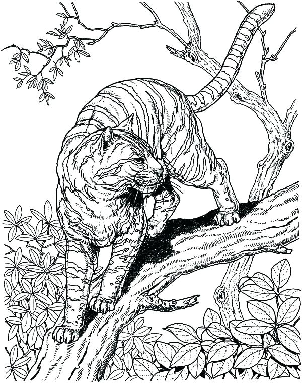 600x760 Hard Printable Coloring Pages For Vanda