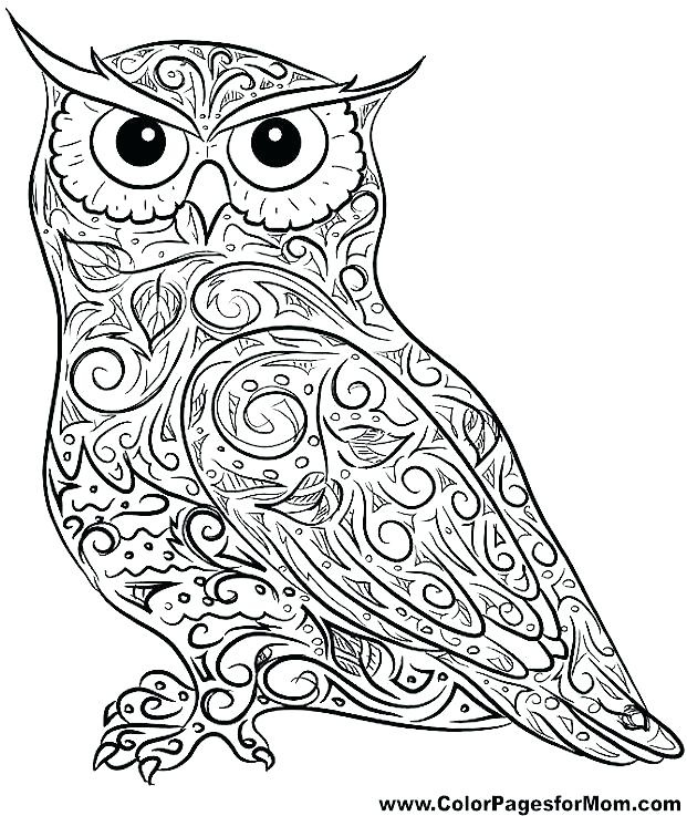 621x737 Hard Owl Coloring Pages Coloring Pages Owl Hard Owl Coloring Pages