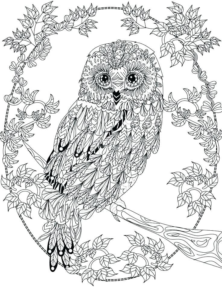 736x952 Hoot Owl Coloring Pages