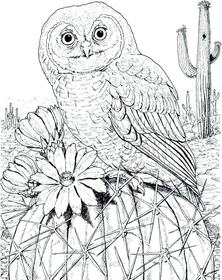 736x929 Owl Coloring Page Printable Owl Coloring Pages Free General Barn