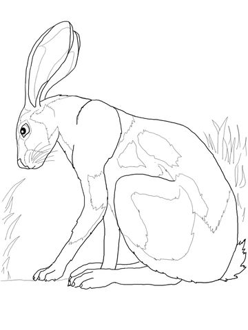 360x480 Desert Hare Coloring Pages Craft Deserts, Rabbit