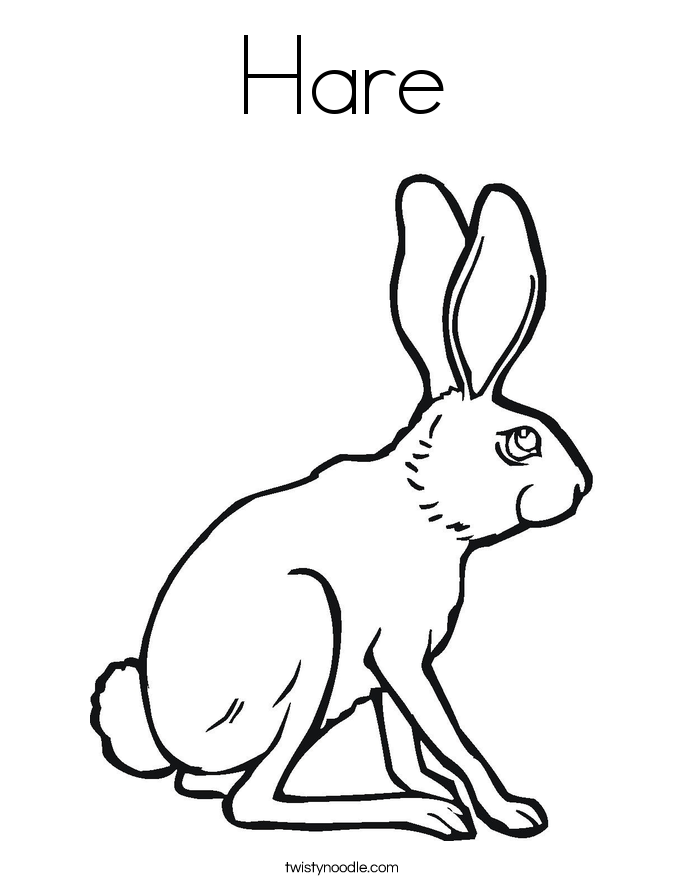685x886 Hare Coloring Page