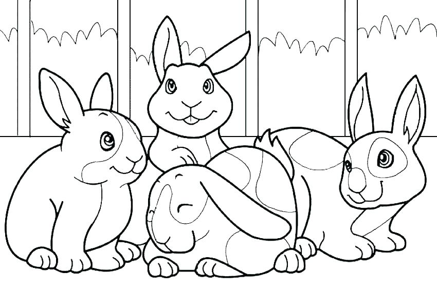 850x567 Peter Rabbit Color Pages Print Peter Rabbit Lily Coloring Pages