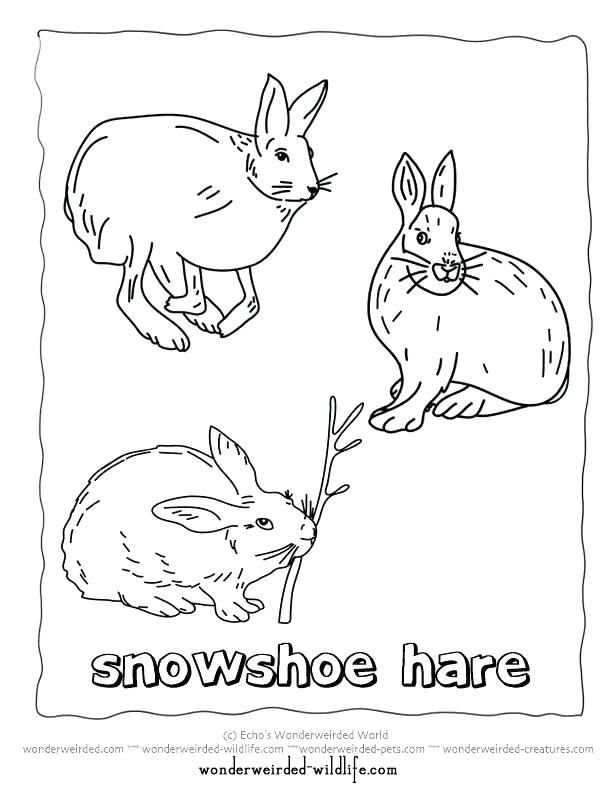 612x792 Polar Animals Coloring Pages Arctic Coloring Pages Printable Hare