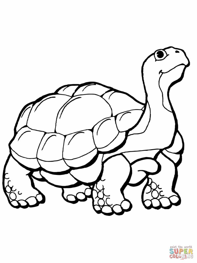 768x1024 Rare Hare Tortoise Coloring Pages Page