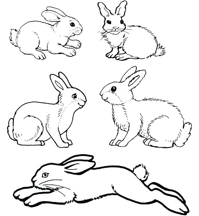 650x706 Roger Rabbit Coloring Pages Roger Rabbit Coloring Pages Rabbit