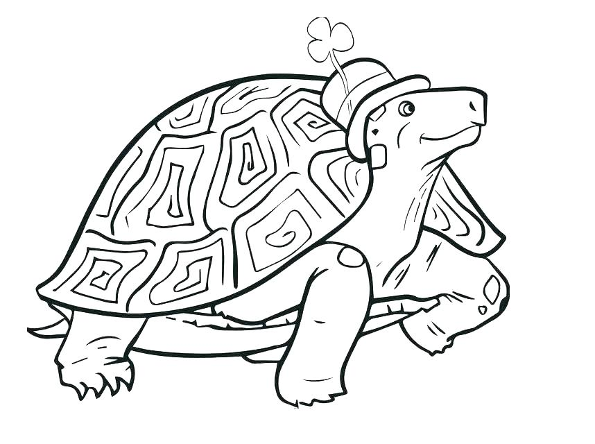 858x640 Tortoise Coloring Page