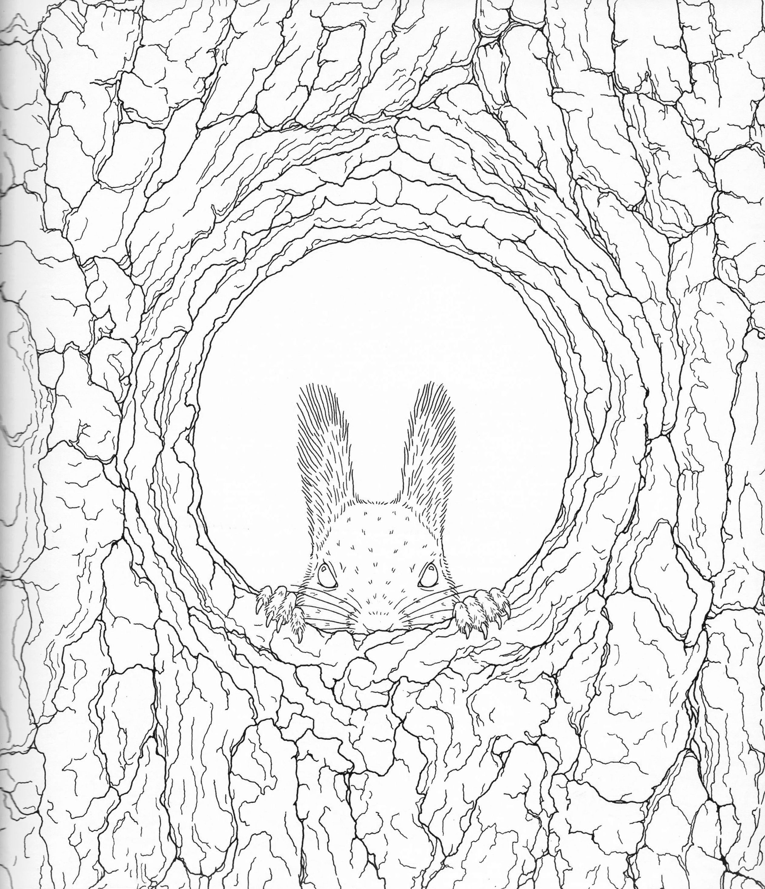 2528x2937 Harmony Of Nature Adult Coloring Book Pg Color Pages