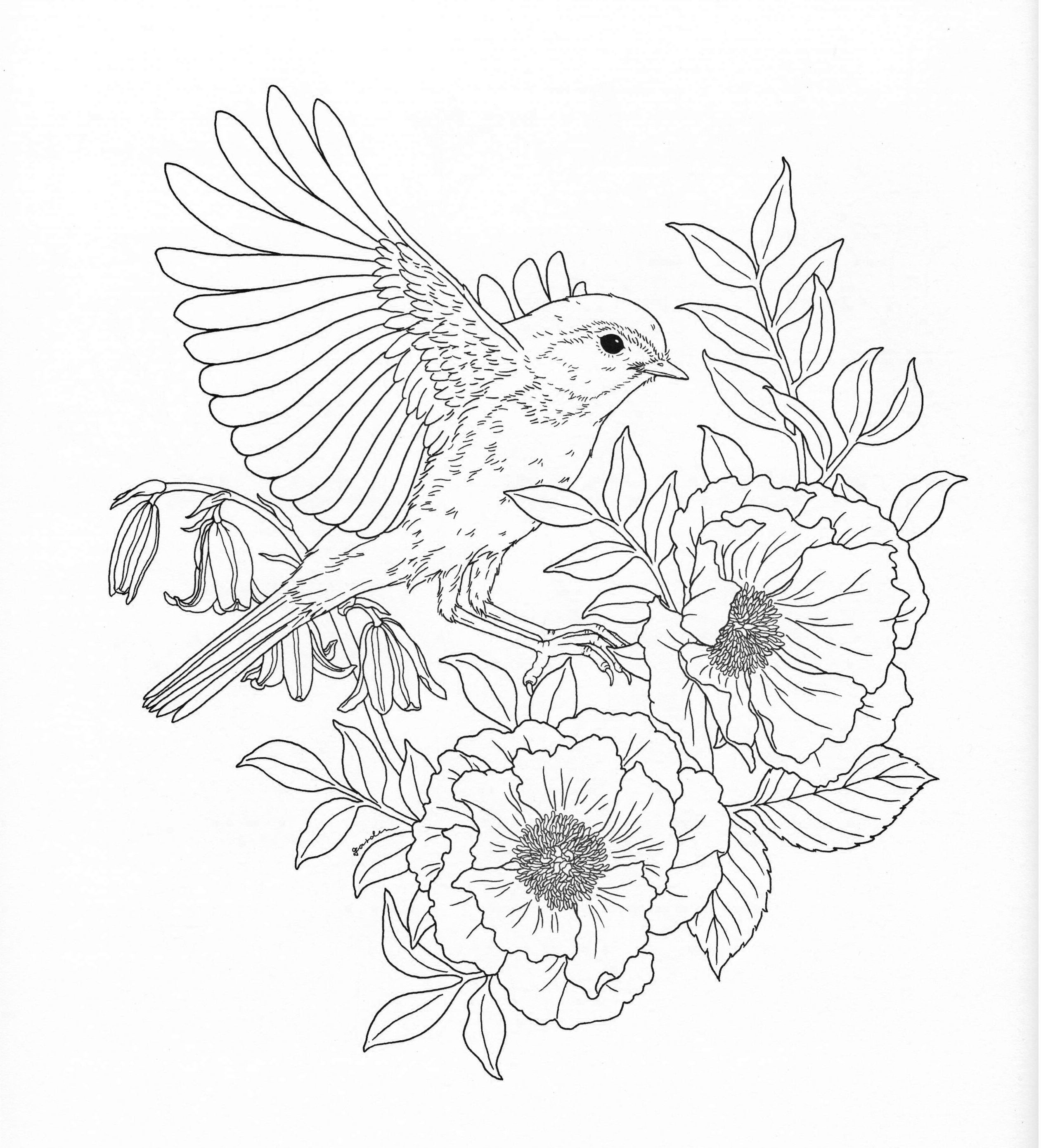 2522x2782 Printable Harmony Nature Adult Coloring Book Pg Free Coloring