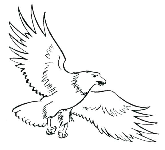577x525 Eagle Color Page Harpy Eagle Coloring Page Bald Eagle Coloring