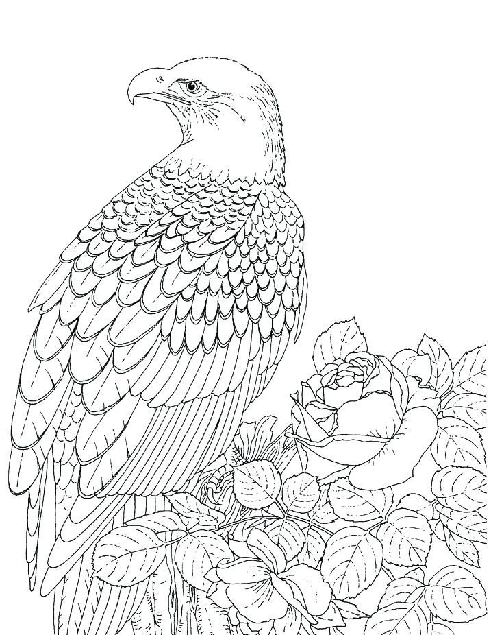 736x926 Harpy Eagle Coloring Page Eagle Color Sheet Eagle Coloring Pages