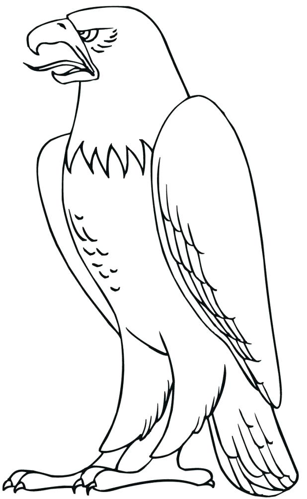 618x1005 Harpy Eagle Coloring Page Harpy Eagle Coloring Sheet See More