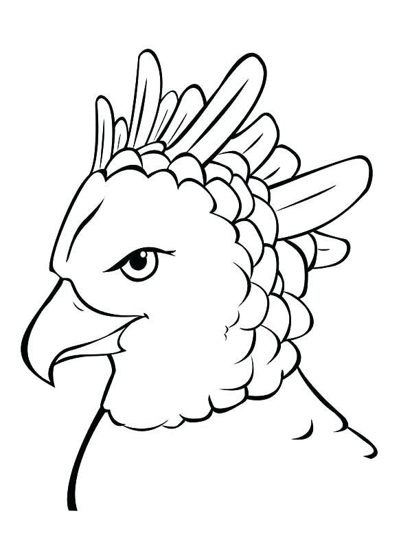 600x776 Harpy Eagle Coloring Page Harpy Eagle Most Powerful Bird Coloring