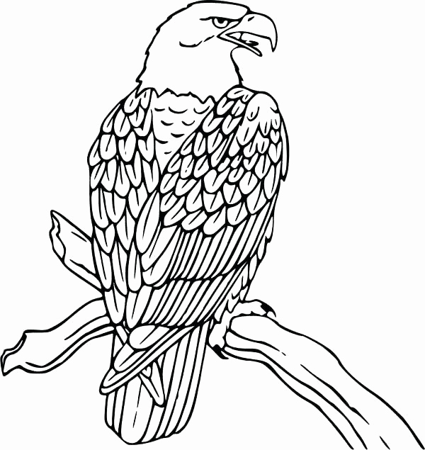 600x635 Harpy Eagle Coloring Page Photos Coloring Pages Eagle Bald Eagle