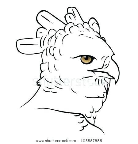 450x470 La Befana Coloring Page Harpy Eagle Coloring Page Harpy Eagle